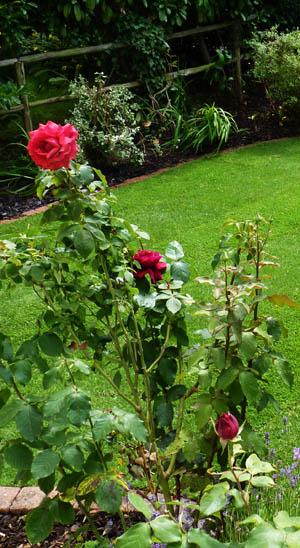 Garden services in aurora and toronto dutch style for Complete garden services