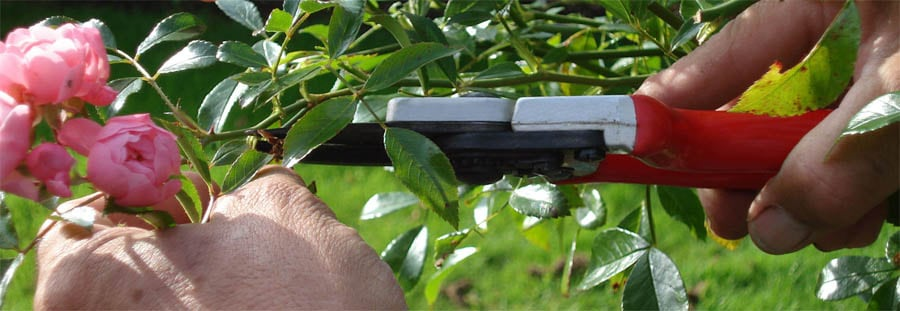 garden maintenance includes pruning and deadheading plant material