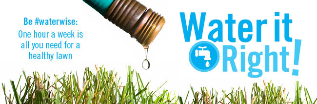 water restriction and watering bans