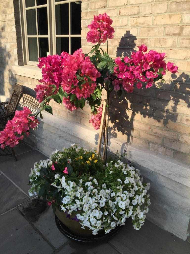season planters and pots for summer