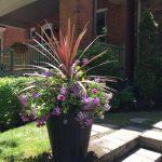 planter for summer