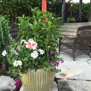 seasonal summer pot
